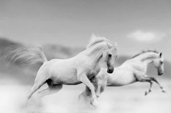 Cavalli che corrono veloci
